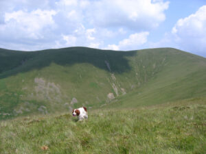 photo of dog above Crosdale