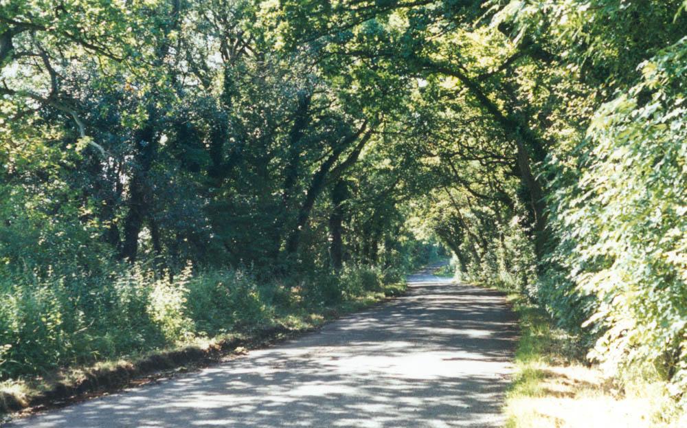 photo of leafy lane