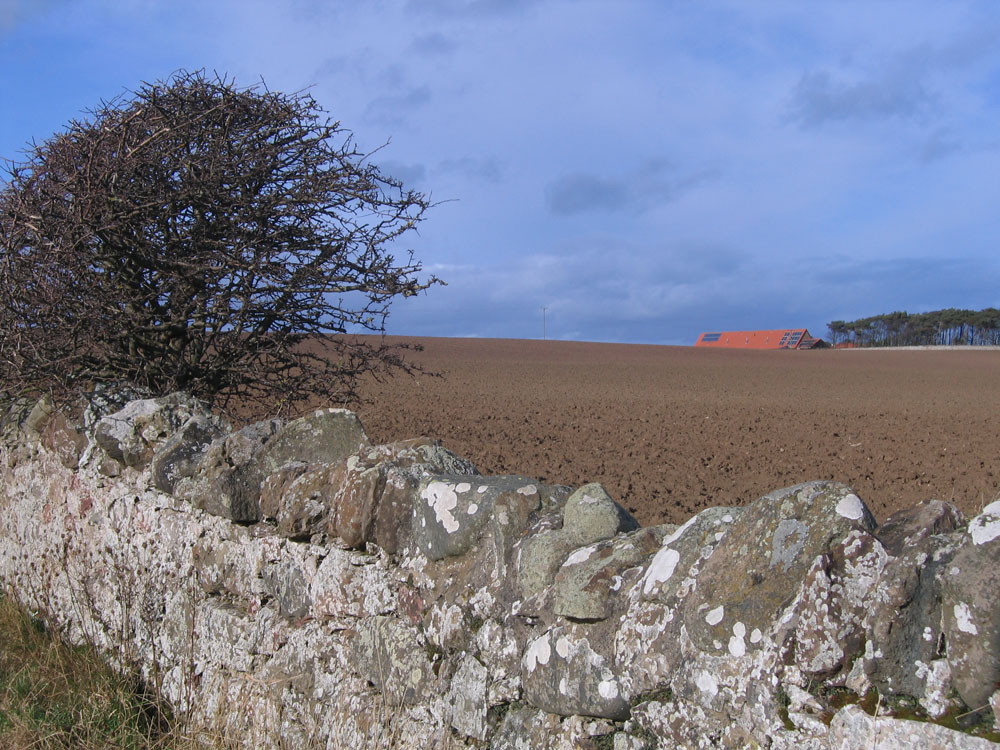 photo of field, tree and distant red roof