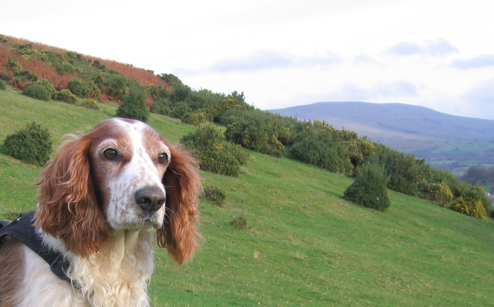 Tilly the dog sits on the hill, photograph