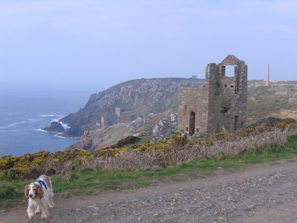 Cliffs at Botallack, chimneys and ruins with a dog in the foreground, photo