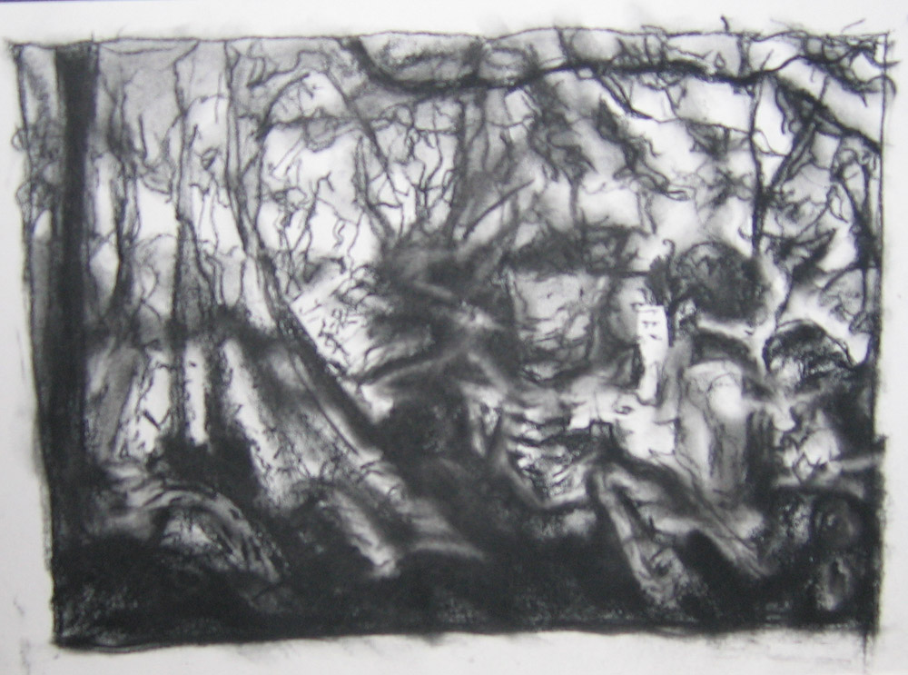 woodland study, charcoal on paper