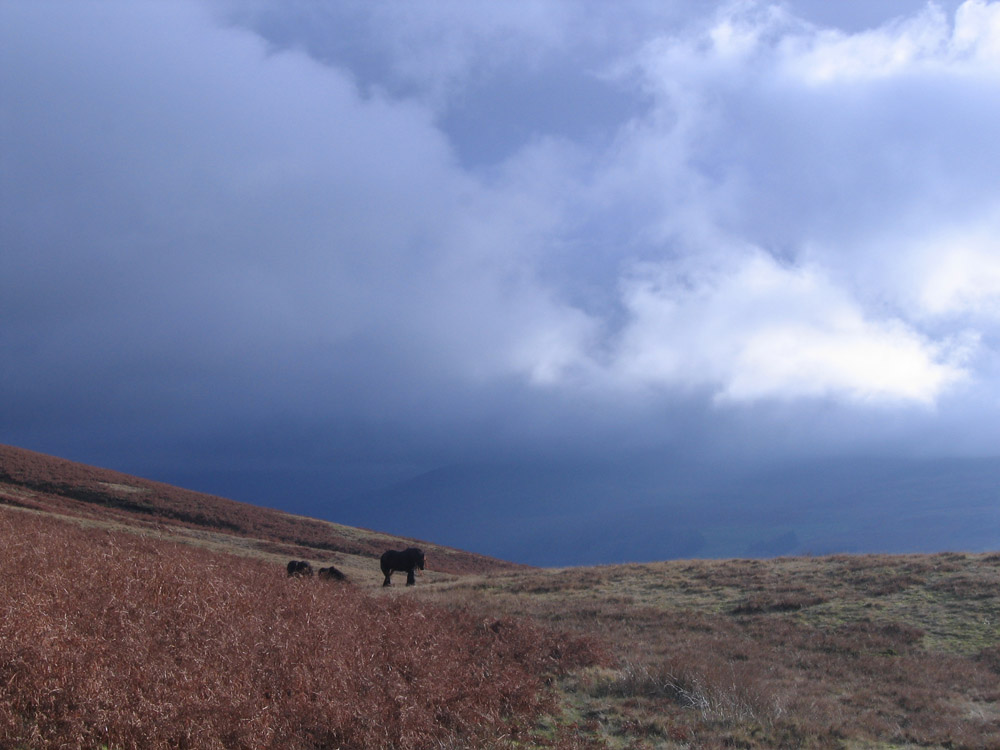 photo of ponies approaching from afar