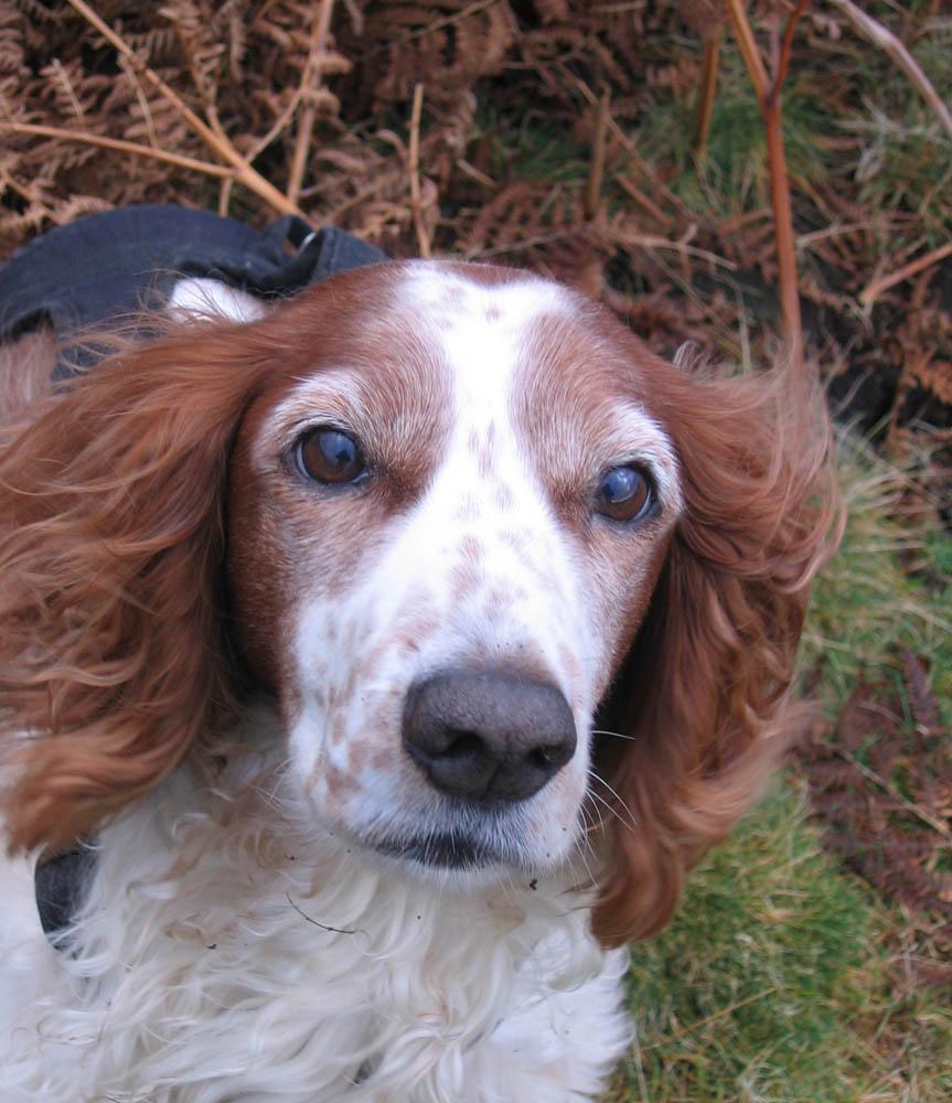 photo of dog in bracken