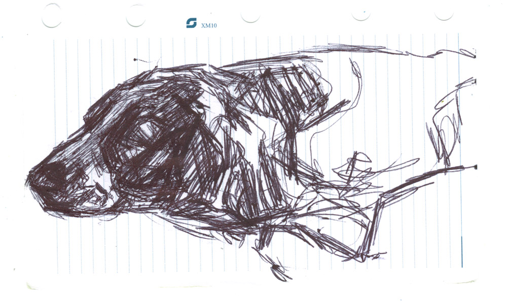 sketch of a dog, biro on paper